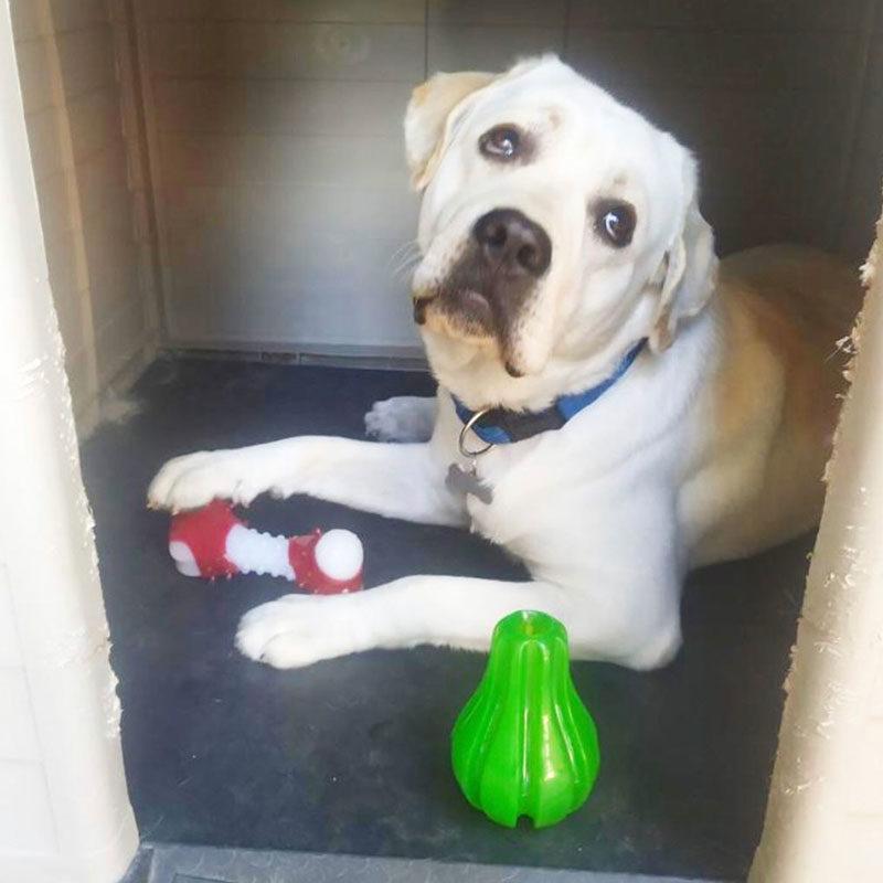 juguete perro pera rosewood