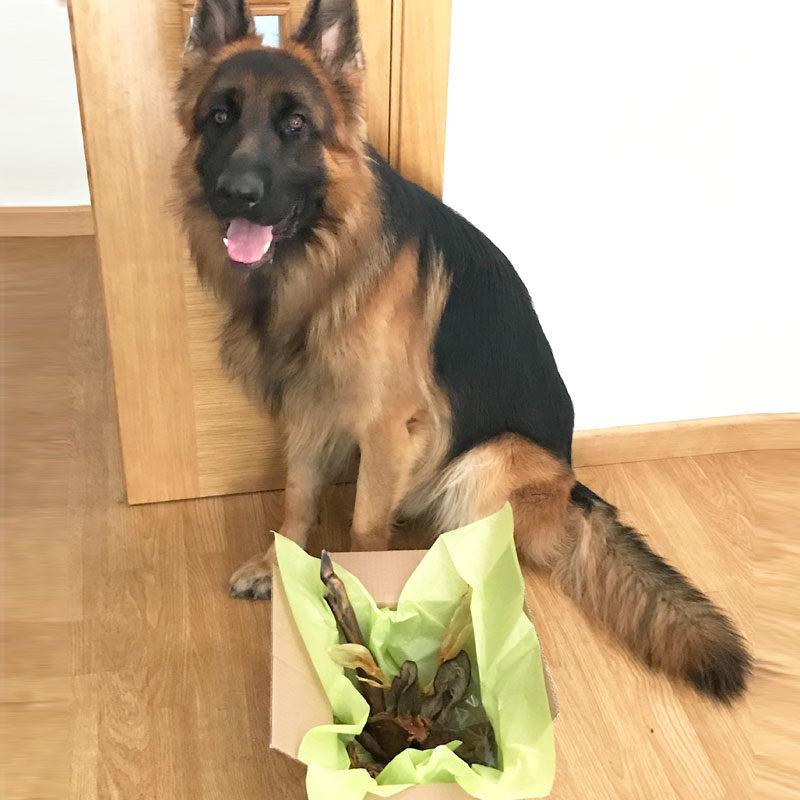caja-degustación-snacks- naturales-perro