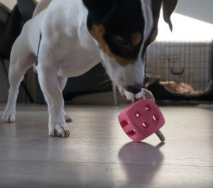juguete rellenable para perros dog comets pollux