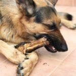 snacks naturales para perros alérgicos