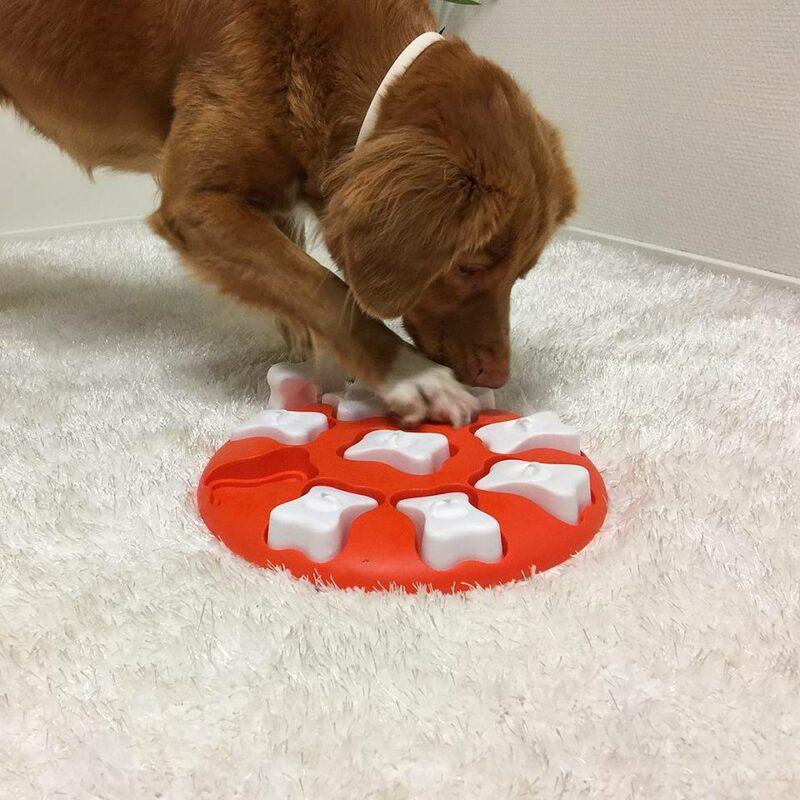 Juguete de inteligencia para perro DOG SMART