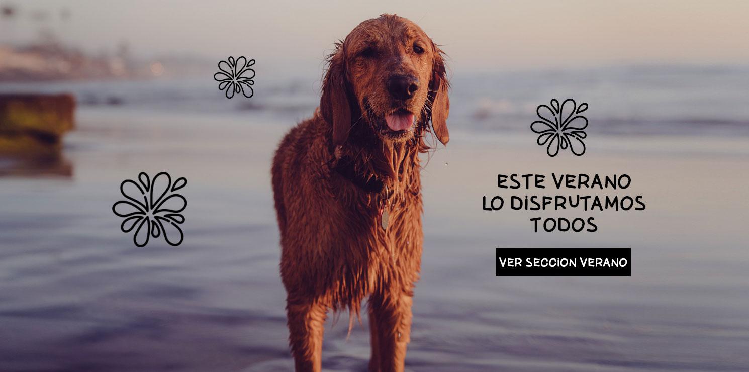 Productos de verano para perros