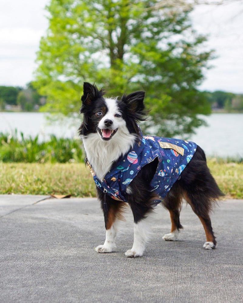 Chubasquero para perro reversible